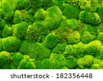 Beautiful Green Moss In The...
