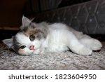 Adorable Kitten Lying On The...
