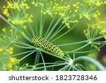 A bright green swallowtail...