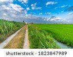 Track Near Rice Fields In...