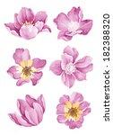watercolor illustration flower... | Shutterstock . vector #182388320