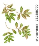 watercolor illustration leaf ... | Shutterstock . vector #182388770