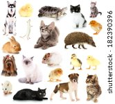 Stock photo collage of different pets isolated on white 182390396