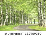 An Image Of Tree Lined Street