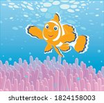 Funny Striped Anemonefish...