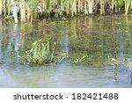 landscape with waterline  birds ... | Shutterstock . vector #182421488
