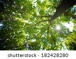 Sunlight Through Green Tree...
