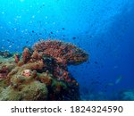 Staghorn Coral And Fish...
