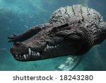Crocodile Underwater