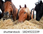 Group of beautiful farm horses...