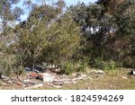 Litter And Illegal Dumping In...