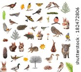Animals And Birds Isolated On ...