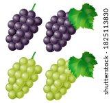Illustration Of Kyoho Grape ...