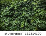 the wall covered by green leaves | Shutterstock . vector #182514170