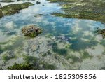 Low Tide Reveals Algae And Tide ...