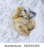 Polar Bear With Cub. Mother Love