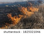 Burning Grass In The Field....