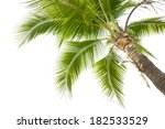 under coconut tree on the white ... | Shutterstock . vector #182533529