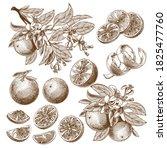 vector illustration of orange... | Shutterstock .eps vector #1825477760