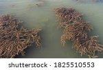 Murky Lake Water Dirty  Dirty...
