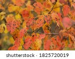 autumn yellow and red bright... | Shutterstock . vector #1825720019