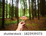 Hand Holding Edible Mushroom...