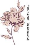 hand drawn contour flower | Shutterstock .eps vector #182597063