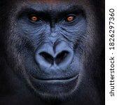 Portrait Of A Gorilla ....