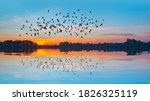 Silhouette Of Birds Flying...