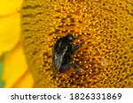 Black And Yellow Striped Bee ...