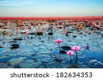 Sea Of Pink Lotus Unseen In...