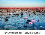 Sea Of Pink Lotus Unseen In...