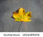 Top View Of A Lone Yellow Maple ...