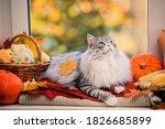 A Fat Fluffy Gray Cat Lies On...