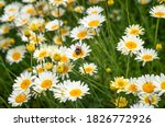 A Bumble Bee On A Flower And...