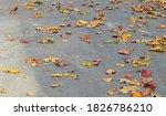 Yellow Leaves On Gray Asphalt ...