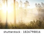 Mysterious Evergreen Forest At...