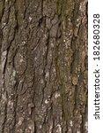 Beautiful Old Tree Bark