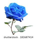 Blue Rose Isolated On White...