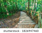 Hiking Down Wooden Stairs On A...