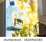 Diy Bird Feeder Made From Two...