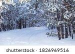 Rural Road Throug Snowbound...