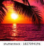 Beautiful Sunset With Palm...