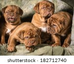 Stock photo litter of dogue de bordeaux puppies on green background 182712740