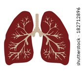 lungs of the person   Shutterstock .eps vector #182712896
