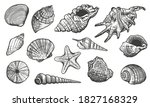 Sea Shells Vector Set. Shell...