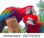 Parrot   Two Birds Teasing A...