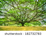 Big Tree With Branch Magnify