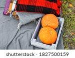 Pumpkin. Two Pumpkins Lie In A...