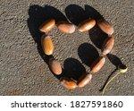 Acorn Heart On The Sidewalk